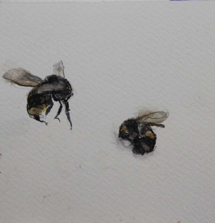 2 BEES 2016 watercolour on paper 11 x 10 cms
